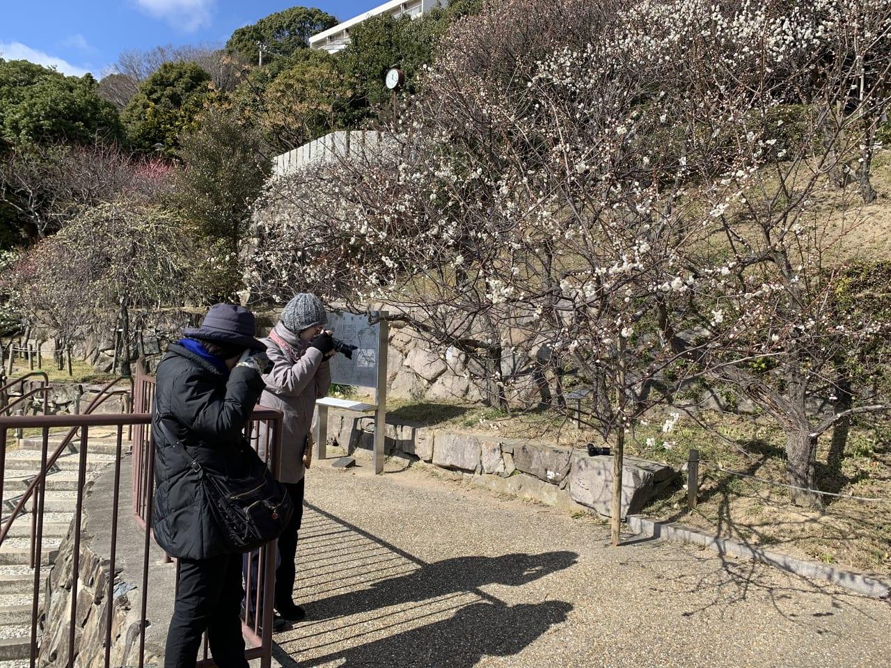 アマチュアカメラマン・岡本公園
